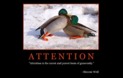 """Free """"Attention"""" Wallpaper"""