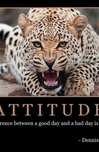 """Free """"Attitude"""" Wallpaper"""
